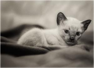 Чумка у кошек: симптомы и лечение. Панлейкопения у кошек