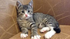 Грыжа у кошек симптомы и лечение