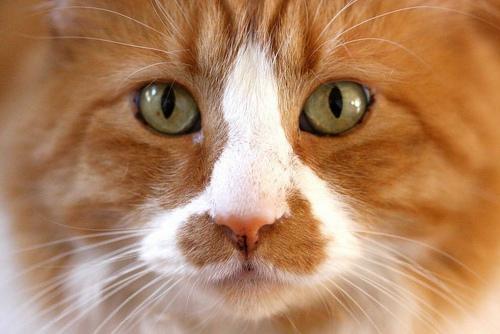 Глисты у кошки  - симптомы и лечение