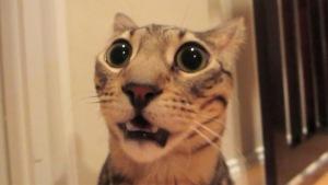 Метеоризм у кошек, описание и симптомы