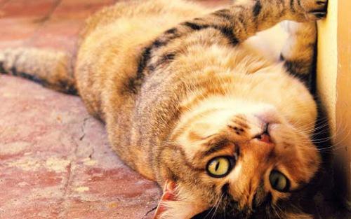 Несколько советов сохранения здоровья кошке
