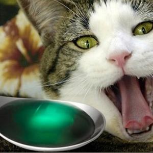 Что делать если кошка отравилась?