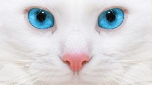 Почему у кошки слезятся глаза, признаки и лечение