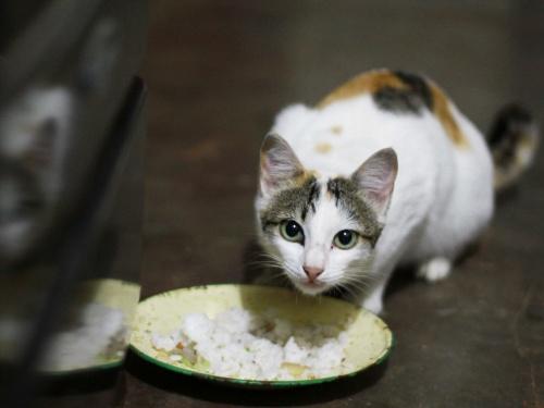 Как отучить кошку или кота от сухого корма