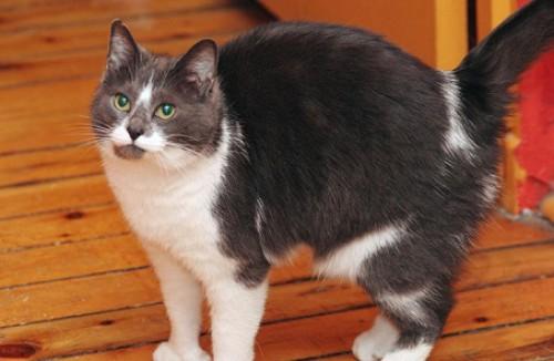 кормление пожилых кошек и котов