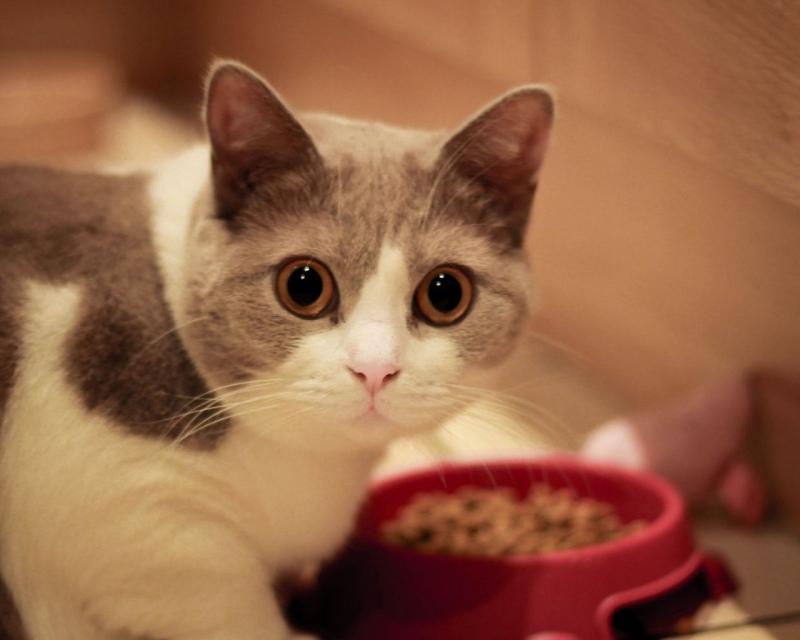 Корм для кошек Брит (Brit)