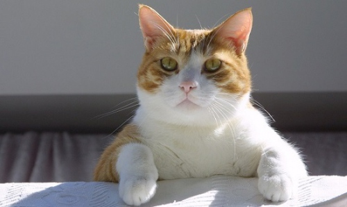 Корм для кошек Фрискис (Friskies)