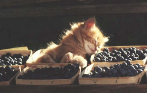 Отзывы о корме для кошек Purina (Пурина)