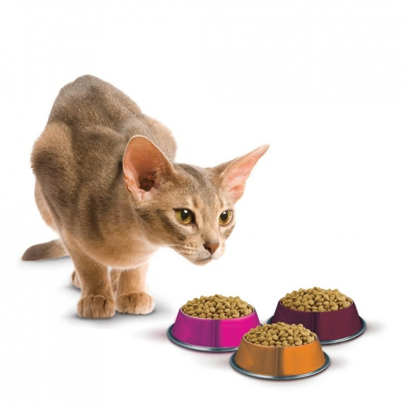 Отзывы о корме Schesir (Шезир) для кошек