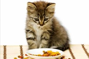 Вреден ли сухой корм для кошек и котов? Вся правда о корме