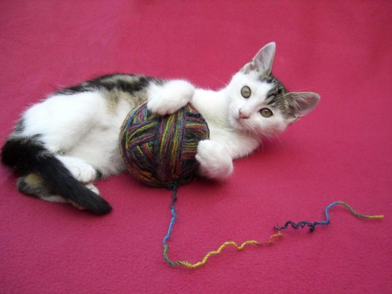 Игрушки для кошек своими руками. Самодельные игрушки для котят