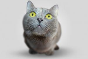 Несколько способов как правильно дать таблетку кошке?