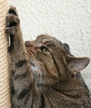 Как легко приучить котенка к когтеточке?