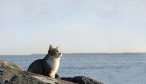 Как путешествовать с кошкой на машине, поезде, самолете. Как выбрать переноску для кошки