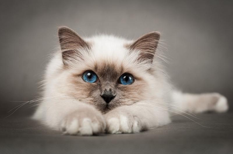 Как выбрать витамины для кошек. Какие витамины давать кошке