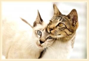 Красивые имена для кошек и котов. Самое красивое имя для кошки
