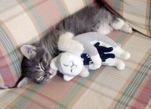 Первая кошка: Стоит ли покупать взрослого кота или котенка?