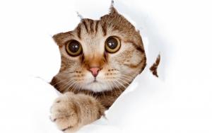 Прикольные и оригинальные клички для котят