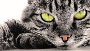17 фактов которые нужно знать о кошках. Интересные факты о кошках в фото