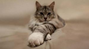 Сколько лет живут кошки. Продолжительность жизни кошек