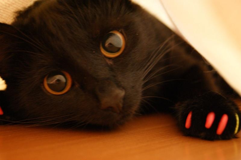 Антицарапки для кошек. Мягкие коготки для кошек