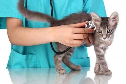 Кастрация котов: что такое и как это происходит плюсы и минусы данной процедуры