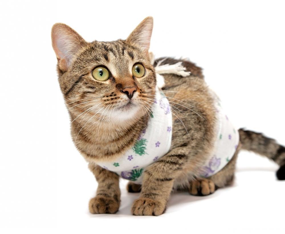 Лапароскопическая стерилизация кошек плюсы и минусы