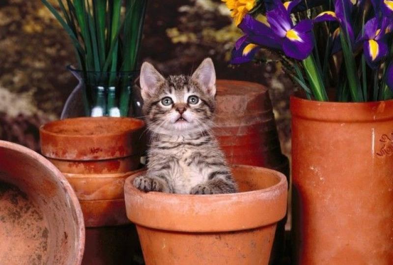 Опасные комнатные растения для кошек