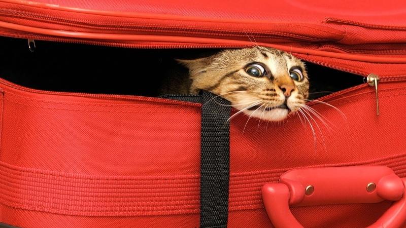 Где передержать кошку. Где можно оставить кошку на время отпуска