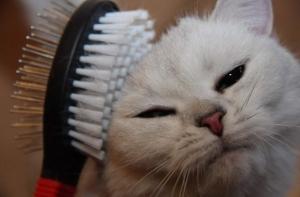 Как и чем правильно вычесывать кошку? Как вывести шерсть из желудка кошки