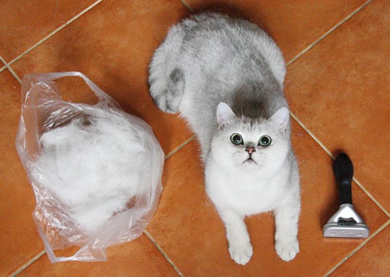 Как избавиться от кошачьей шерсти в доме?