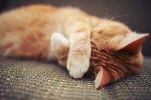 Как избавиться и вывести запах кошачьей мочи