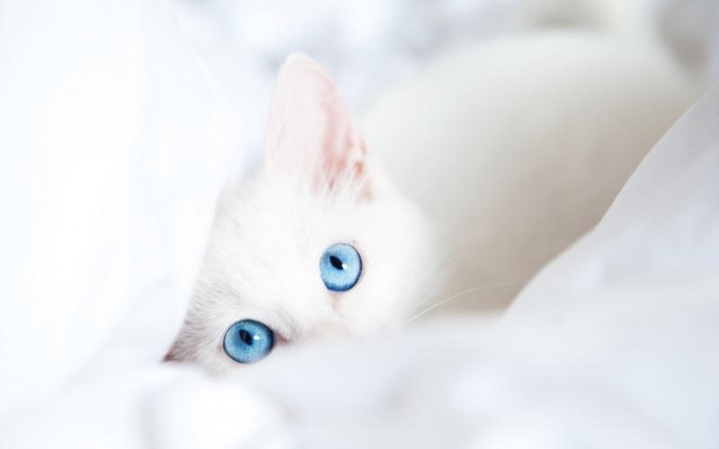 Клички для котят белого цвета