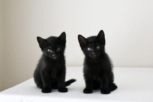 Как назвать черного котенка. Кличка (имя) для черного кота и кошки