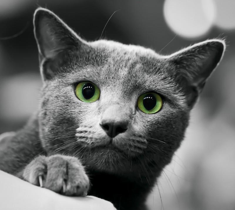 Как назвать кошку или котенка голубого окраса?