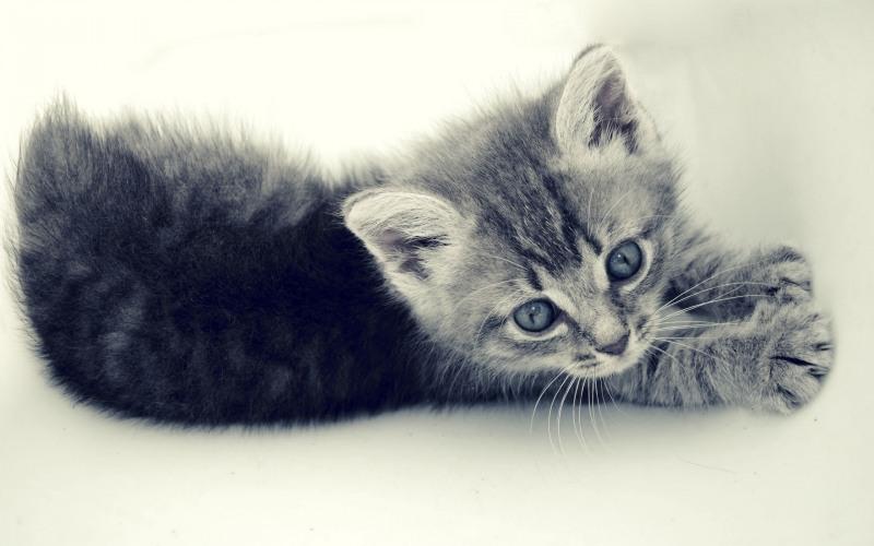 Как назвать серого котенка?