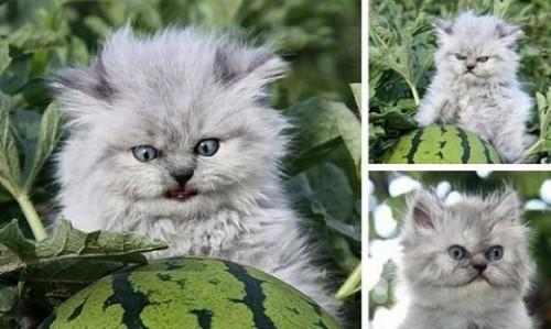 уход за котёнком