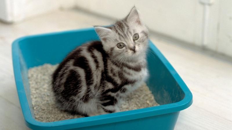Какой кошачий туалет лучше: 5 лотков, которые вы захотите купить