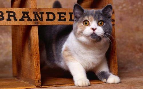 Клички (имена) кошек и котов на английском языке
