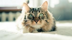 Линька у кошек: причины