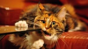 Смена зубов у котят. Сколько зубов у кошки?